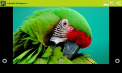 Amazing Animals Wallpapers Free screenshot 6/6