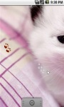 Cute White Kitty Live Wallpaper screenshot 1/5