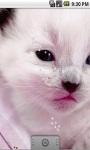 Cute White Kitty Live Wallpaper screenshot 2/5
