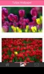 Tulip Wallpapers HD screenshot 1/6