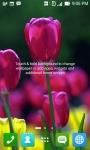 Tulip Wallpapers HD screenshot 6/6