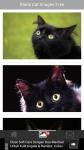 Black Cat Images Free screenshot 2/6