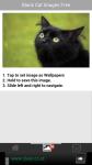 Black Cat Images Free screenshot 3/6