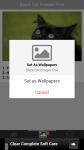 Black Cat Images Free screenshot 4/6