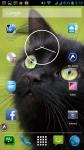 Black Cat Images Free screenshot 6/6