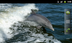 Sea Mammals - Wallpaper Slideshow screenshot 1/4