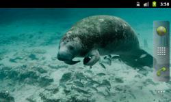 Sea Mammals - Wallpaper Slideshow screenshot 2/4