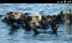 Sea Mammals - Wallpaper Slideshow screenshot 3/4