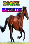 The Horse Breeds screenshot 1/3