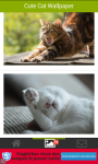 Cute-Cat Wallpaper screenshot 2/4