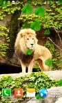 Lion Live Wallpapers Best screenshot 3/6