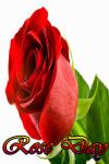 The Rose Day screenshot 1/4