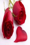 The Rose Day screenshot 2/4