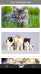 Free Cat Backgrounds screenshot 2/6