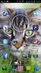 Free Cat Backgrounds screenshot 6/6