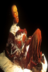 Famous Mummified Bodies screenshot 2/4