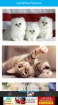 Cat Kitten Pictures screenshot 2/6