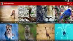 Animals Wallpapers HQ screenshot 4/5