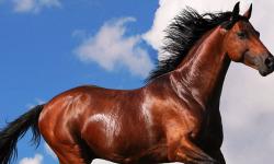Best Horse Wallpaper screenshot 2/4
