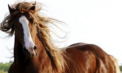 Best Horse Wallpaper screenshot 3/4