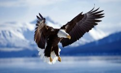 EAGLE ATRACTION IN THE AIR HD WALLPAPER screenshot 2/6