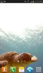 SeaTurtle video wallpaper Free screenshot 1/6