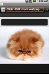 Cutes Cats Wallpapers screenshot 1/2