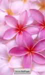 Beautiful Flowers HD Wallpapers screenshot 3/5