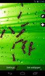 Ant Crusher Live Wallpaper screenshot 3/4