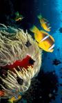 Marine Fish HD Wallpaper For Android Phones screenshot 1/6