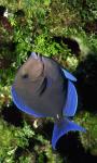 Marine Fish HD Wallpaper For Android Phones screenshot 3/6