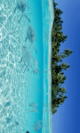 Marine Fish HD Wallpaper For Android Phones screenshot 4/6