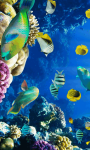 Marine Fish HD Wallpaper For Android Phones screenshot 5/6