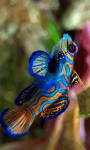 Marine Fish HD Wallpaper For Android Phones screenshot 6/6