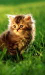 Amazing Cute Cats HD Wallpaper screenshot 3/6