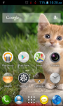 Cat Wallpapers HD Part 1 screenshot 1/6