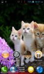 Cat Wallpapers HD Part 1 screenshot 2/6