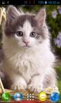 Cat Wallpapers HD Part 1 screenshot 4/6