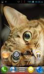 Cat Wallpapers HD Part 1 screenshot 6/6