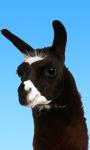 Super Llama Chase: Road Run screenshot 6/6