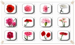 Carnation Flowers Onet Classic Game screenshot 1/3