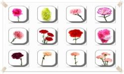 Carnation Flowers Onet Classic Game screenshot 2/3