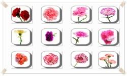 Carnation Flowers Onet Classic Game screenshot 3/3