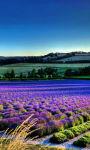 Lavender Flower Summer Wallpaper HD screenshot 3/3