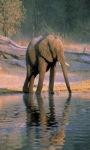 Elephant Pondd Live Wallpaper screenshot 2/6