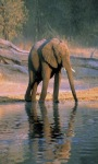 Elephant Pondd Live Wallpaper screenshot 6/6