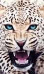 Leopard Roaring Live Wallpaper screenshot 1/3