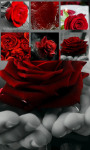 Red Rose jigsaw puzzle screenshot 3/4