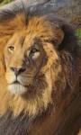 Lion - The King screenshot 3/6