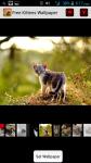 Free Kittens Wallpapers screenshot 1/4